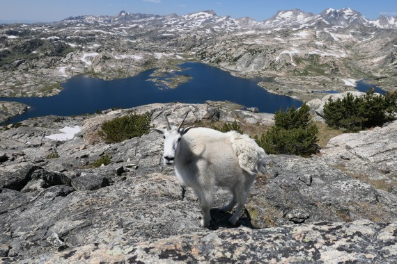 Mountain Goat and Fossil Lake from Bald Knob