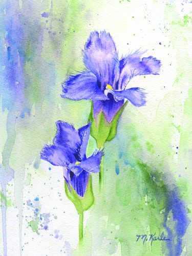 Painting of Fringed Gentian by Marsha Karle