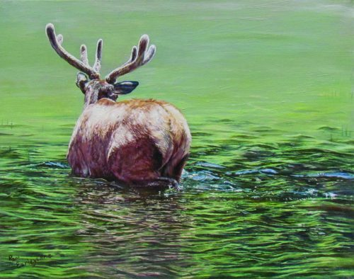 Oil painting of elk in Phantom Lake, Yellowstone, by Pamela Earleywine