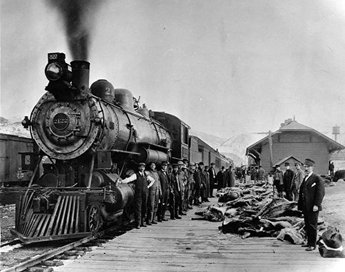 Men standing with elk carcasses ready to be shipped by Northern Pacific Railway from Gardiner freight depot